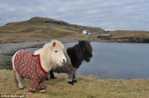 poniesinsweaters